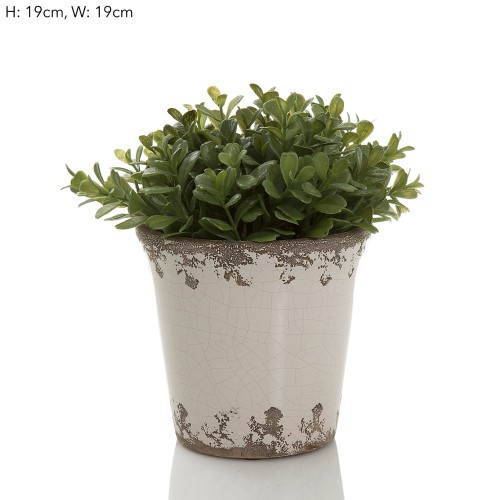 Boxwood Ceramic Pot