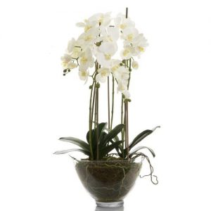 Large White Orchid in Glass Bowl