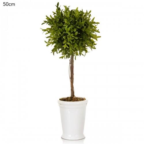 Rosemary Topiary