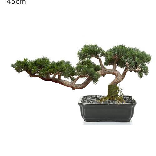 Housenote Cedar Bonsai