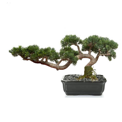 Housenote 45cm Cedar Bonsai