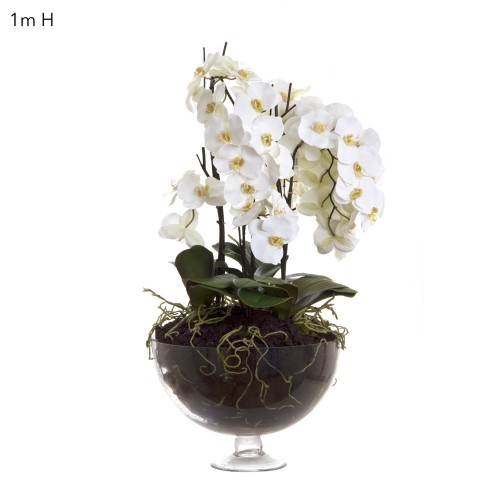 Housenote Large Orchid Display