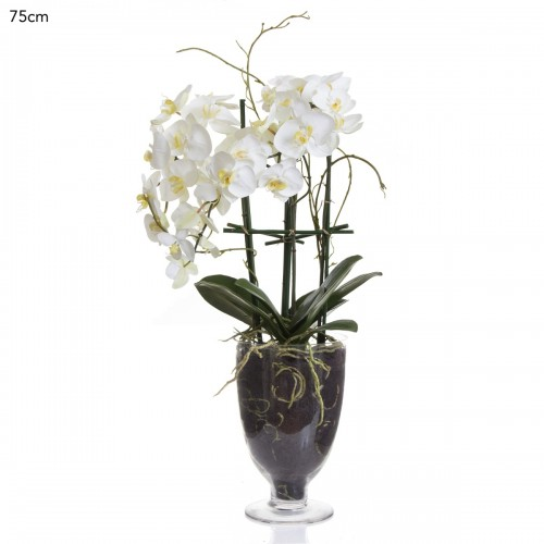 Large Housenote Orchid Display
